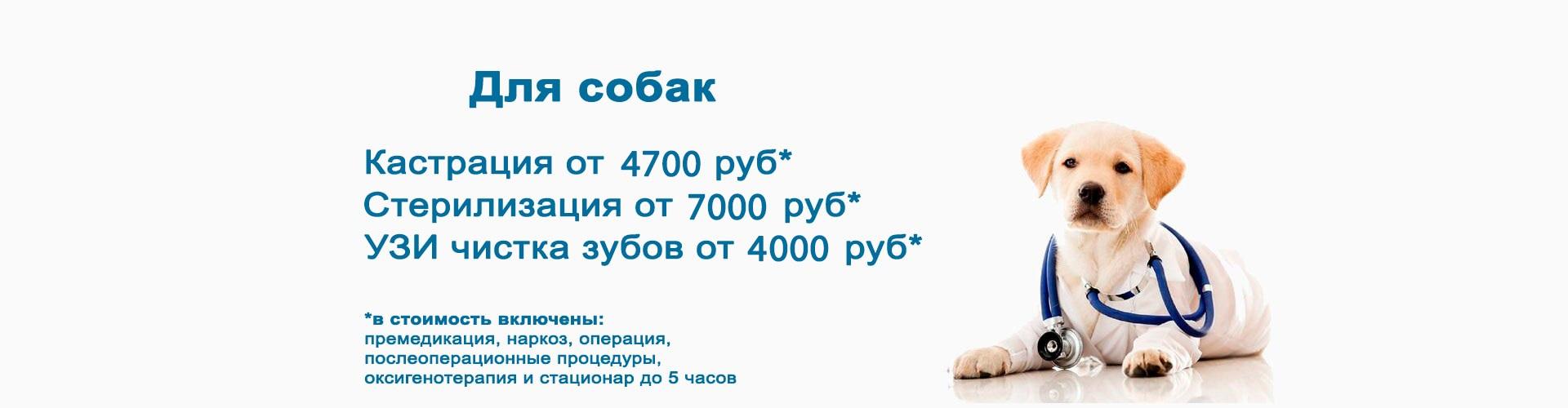 Для собак кастрация от 3000 руб, стерилизация от 5500 руб, УЗИ чистка зубов 3500 руб!