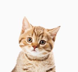 Ветврач для кошек